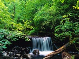 Water Falling onto Rocks and Log Photographic Print by Robert Glusic