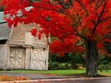Baum mit rot gefärbten Blättern und Scheune Fotodruck von Mark Karrass