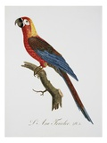 Tricolor Macaw Giclee Print by Jacques Barraband