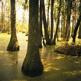 Trees Amid Swampy Garden Photographic Print by Brian Yarvin