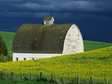White Barn and Canola Field Photographie par Darrell Gulin