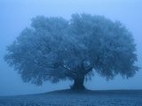 Tree in the Mist Photographic Print by Mark Karrass