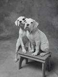 Two Dogs at Bench Photographic Print by Lawrence Manning