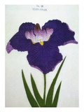 Yedo-Jiman Book of a Purple Iris Giclee Print by  Stapleton Collection