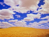 White Clouds Over Wheat Field Photographic Print by Darrell Gulin