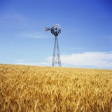 Windmill in Wheat Field Photographic Print by Paul Edmondson