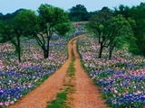 Wildflowers Along a Dirt Road Photographic Print by Cindy Kassab