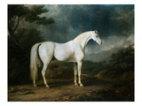 White Horse in a Wooded Landscape Giclee Print by Sawrey Gilpin