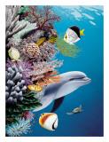La scogliera del delfino Stampa giclée di Mark Mackay
