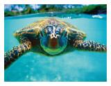 Honu, Hawaiian Sea Turtle Giclee Print by Kirk Lee Aeder