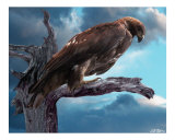 Perched Giclee Print by Bill Stephens