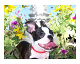 Angus in the Flower Bed Giclee Print by Kori Jones