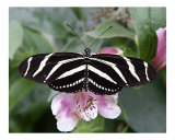 Butterfly 306 Photographic Print by Scott Kuehn