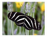 Butterfly 320 Photographic Print by Scott Kuehn