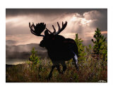 Bullwinkle Giclee Print by Bill Stephens