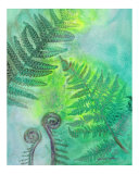 Fiddleheads Begin to Play Giclee Print by Mark Weerda