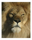 The King Photographic Print by Scott Kuehn