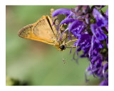Butterfly On Purple Flower Photographic Print by Josh Williams
