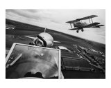 Tigermoths Photographic Print by John J Robertson