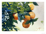 Oranges on a Branch, 1885 Poster di Winslow Homer