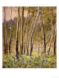 Sunlit Birches, 1924 Art by Gunnar Widforss
