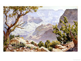 Grand Canyon Giclee Print by Gunnar Widforss