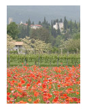 The Poppies at Castello D' Aviano Photographic Print by Donna Corless