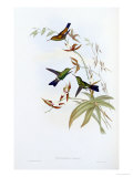 A Monograph of the Trochilidae or Family of Hummingbirds, Published 1849-1861 Giclee Print by John Gould