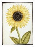 Le Grand Soleil, circa 1700 Giclée-Druck