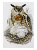 The Birds of Europe, Published 1832-1837 Gicl&#233;e-Druck von John Gould