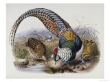 A Monograph of the Phasianidae or Family of Pheasants, 1872 Premium Giclee Print by Daniel Giraud Elliot