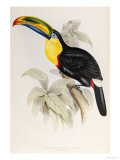 A Monograph of the Ramphastidae or Family of Toucans, 1834 Reproduction proc&#233;d&#233; gicl&#233;e par John Gould