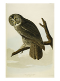 Great Cinereous Owl Giclee Print by John James Audubon
