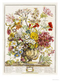 Hand Colored Engraving of Bouquet- October, 1730 Giclee Print by Robert Furber