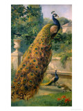 Peacocks in the Park, 1886 Reproduction proc&#233;d&#233; gicl&#233;e par Olaf August Hermansen