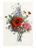 Collection Des Fleurs et Des Fruits, 1805 Giclee Print by Jean Louis Prevost