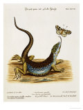 Lizard Chasing a Butterfly Giclee Print by Johann Michael Seligman