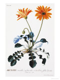 Plantae Selectae Giclee Print by Christoph Jacob Trew