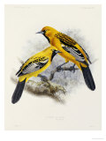 "Hand-Coloured Lithograph from ""Fauna, Flora and Archaeology of Central America"" Giclee Print by J. G. Keulemans"
