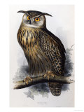 "Eagle Owl, Lithographic Plate from ""The Birds of Europe"" Premium Giclee Print by John Gould"