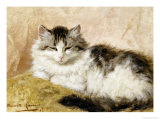 A Cat, 1893 Art by Henriette Ronner-Knip