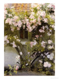 Climbing Roses, 1912 Reproduction proc&#233;d&#233; gicl&#233;e par Michael Peter Ancher