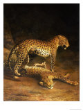 Two Leopards Lying in the Exeter Exchange, 1808 Giclée-tryk af Jacques-Laurent Agasse