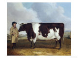 A Prize Friesian Bull with a Cowherd in a Landscape Giclee Print by Richard Whitford