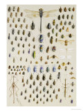 One Hundred and Fifty Insects, Dominated at the Top by a Large Dragonfly Giclee Print by Marian Ellis Rowan