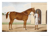 Jeremy Jumps, a Chestnut Stallion Giclee Print by Shaykh Muhammad Amir Of  Karraya Amir Of  Karraya