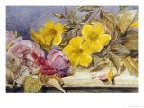 A Still Life of Roses and Other Flowers on a Ledge Giclee Print by Mary Elizabeth Duffield