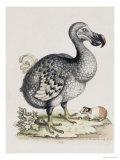 The Dodo Premium Giclee Print by Frederick P. Nodder