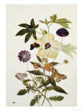 Milkweed, Poppy and Hibiscus with Butterflies and a Beetle Giclee Print by Thomas Robins Jr
