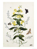 Yellow Loosestrife and Other Wild Flowers Giclee Print by Thomas Robins Jr